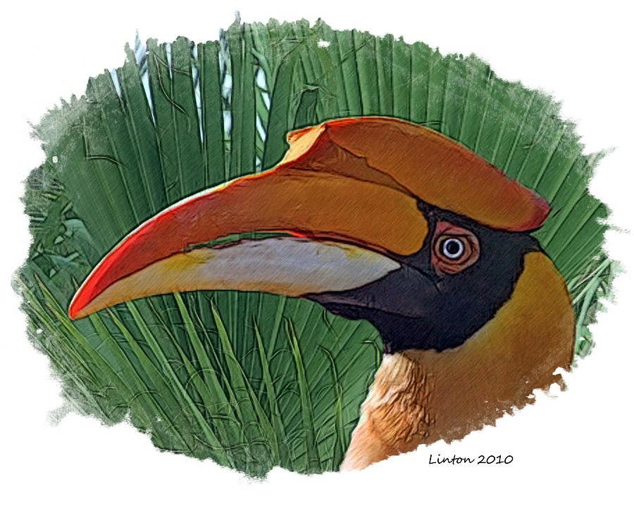 Indian Hornbill Digital Art - Indian Hornbill by Larry Linton