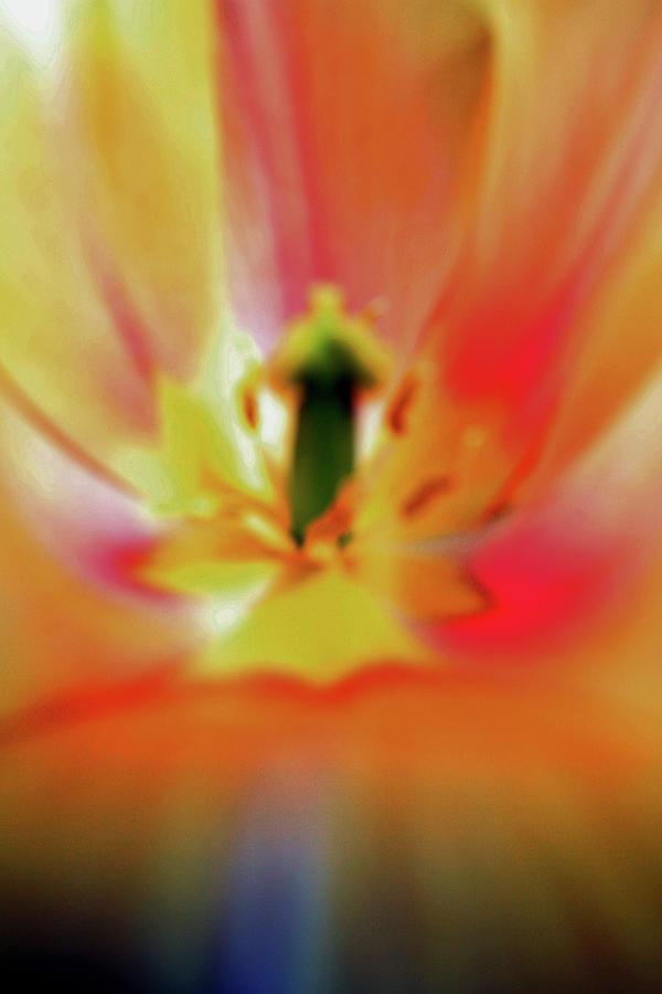 Flower Photograph - Inner Self Vertical by Scott Mahon