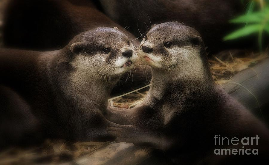 Animals Photograph - Innocence by Kym Clarke