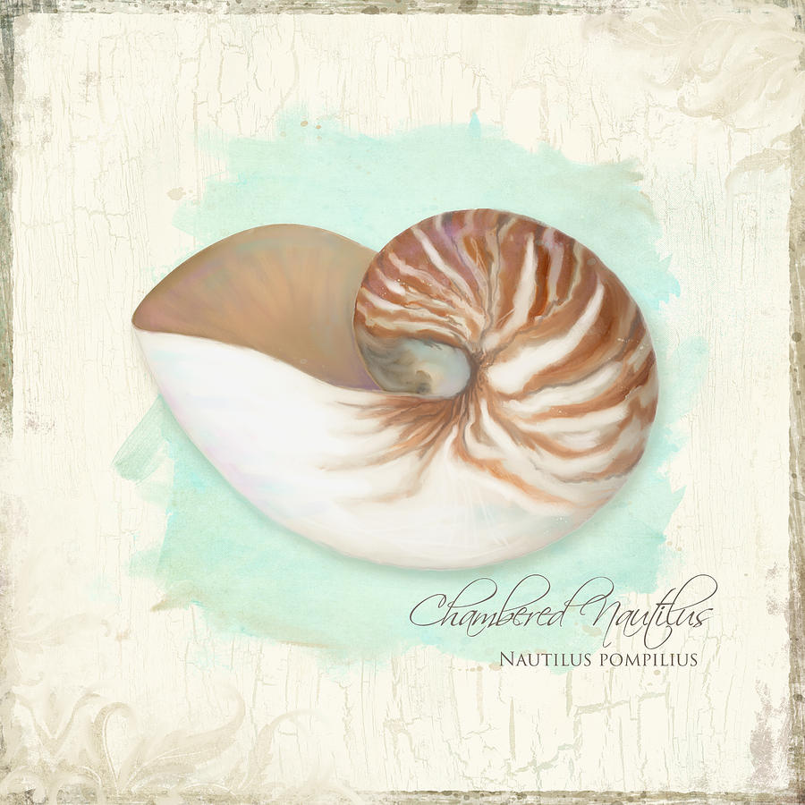 chambered nautilus shell drawing wwwimgkidcom the