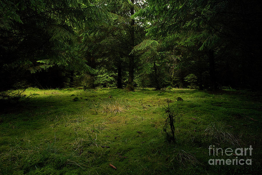 Internationaler Tag Des Waldes - International Day Of Forests - Wood Glade In The Urft Valley Photograph