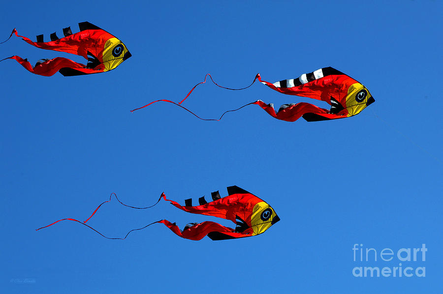 Clay Photograph - Its A Kite Kind Of Day by Clayton Bruster