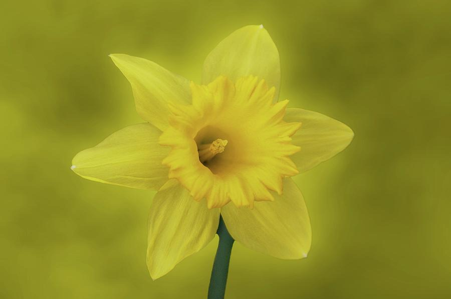 Daffodil Photograph - Its Spring by Sandy Keeton