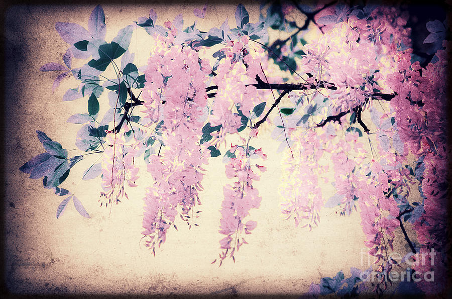 Laburnum Photograph - Its Springtime by Angela Doelling AD DESIGN Photo and PhotoArt