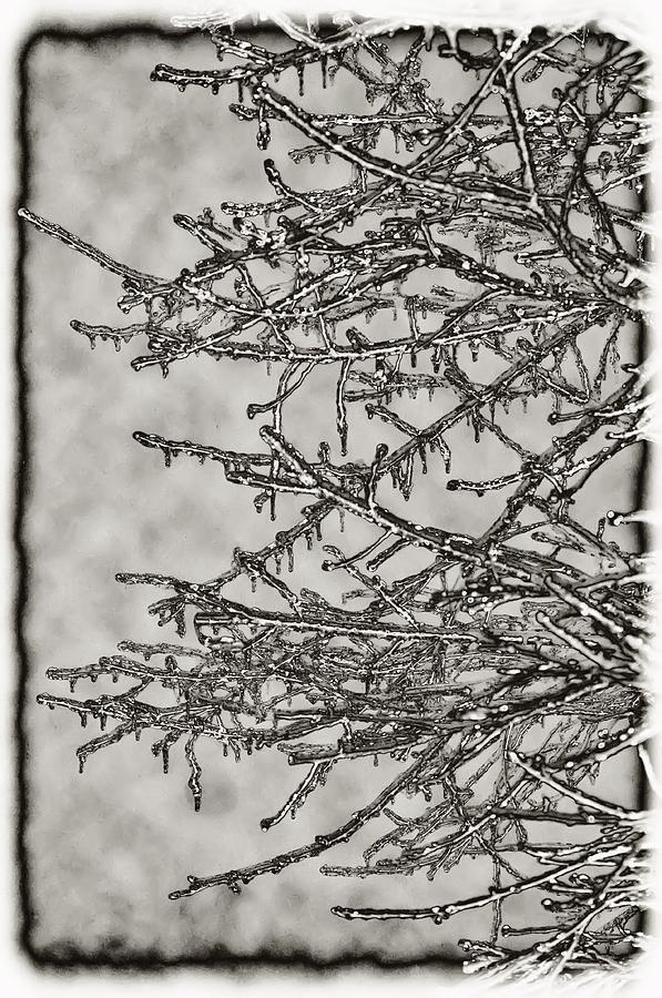 Ice Photograph - Jack Frost by Bill Cannon