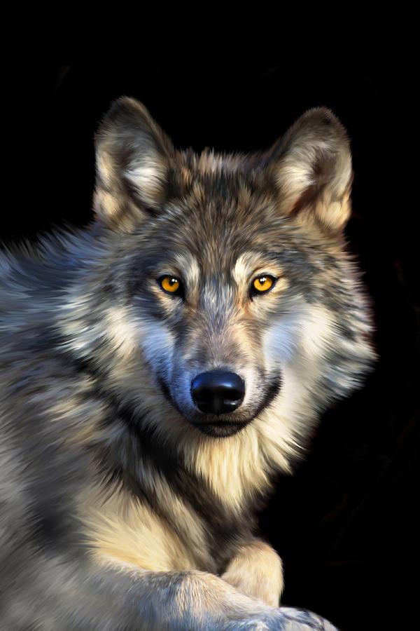 Wolf Digital Art - Jacob by Julie L Hoddinott