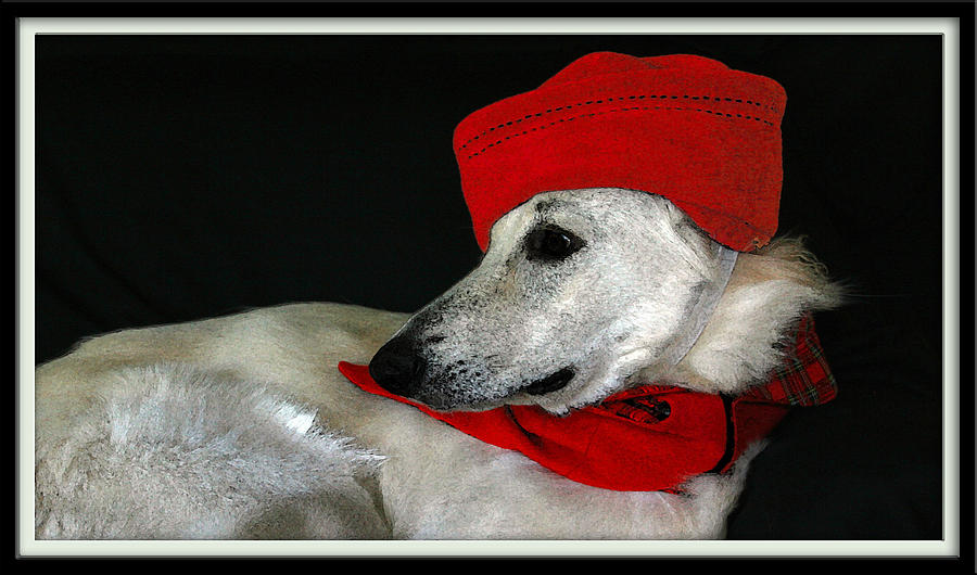 Red Hats Photograph - Jane Anne by Margaret Hood