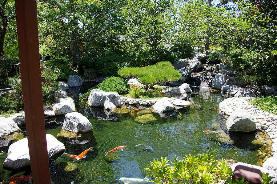 Koi Pond 4 Japanese Friendship Garden Photograph By