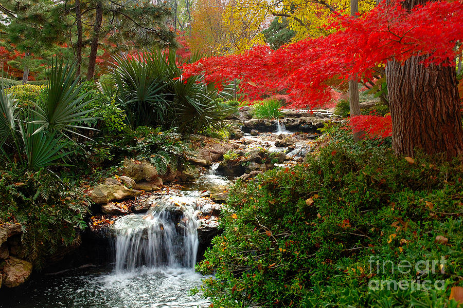 Japanese Garden Brook Photograph