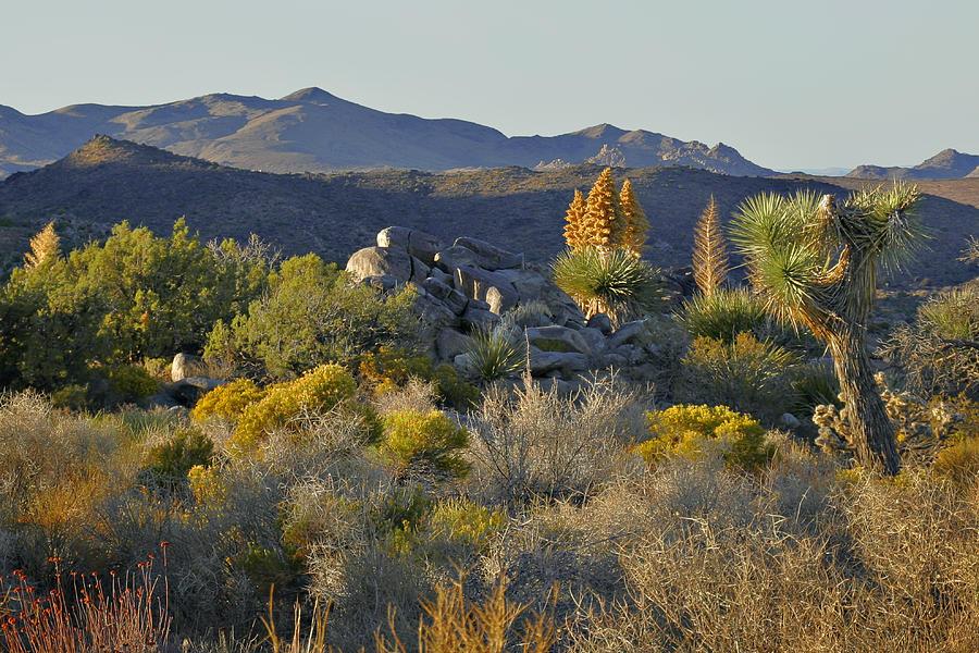 Joshua Tree National Park In California Photograph