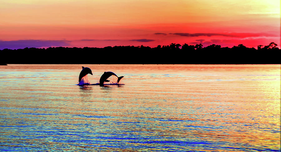 Dolphins Photograph - Joy Of The Dance by Karen Wiles