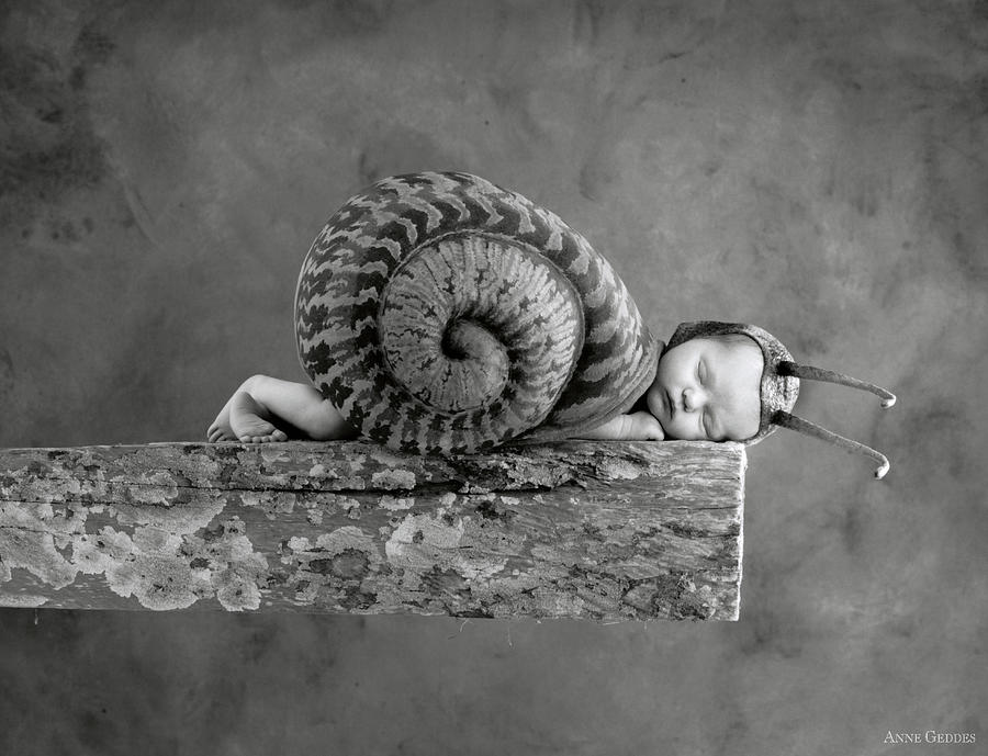 Black And White Photograph - Julia Snail by Anne Geddes