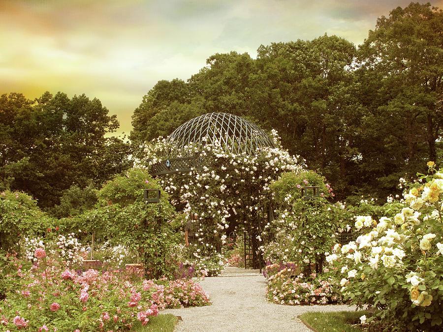 Garden Photograph - June Bloom by Jessica Jenney