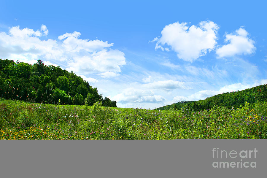 Agriculture Photograph - June Flowers With Bright Summer Sky by Sandra Cunningham