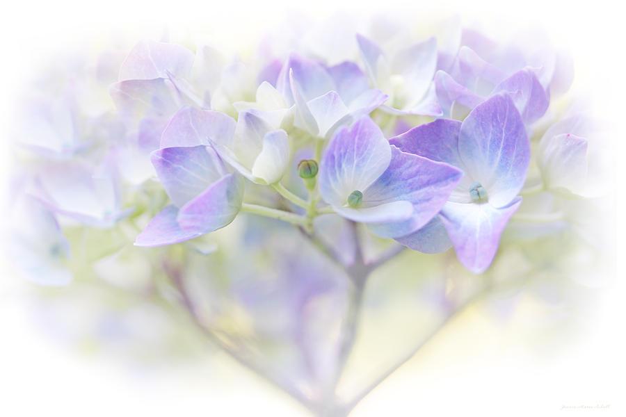 Hydrangea Photograph - Just A Whisper Hydrangea Flower by Jennie Marie Schell