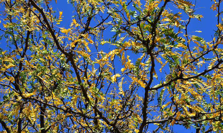 Fall Photograph - Kaleidoscope by Corinne Rhode
