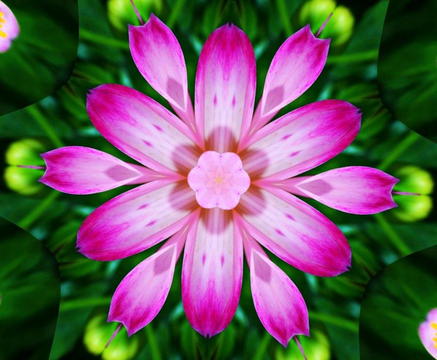 Flower Photograph - Kaleidoscope Of A Dahlia by Cathie Tyler