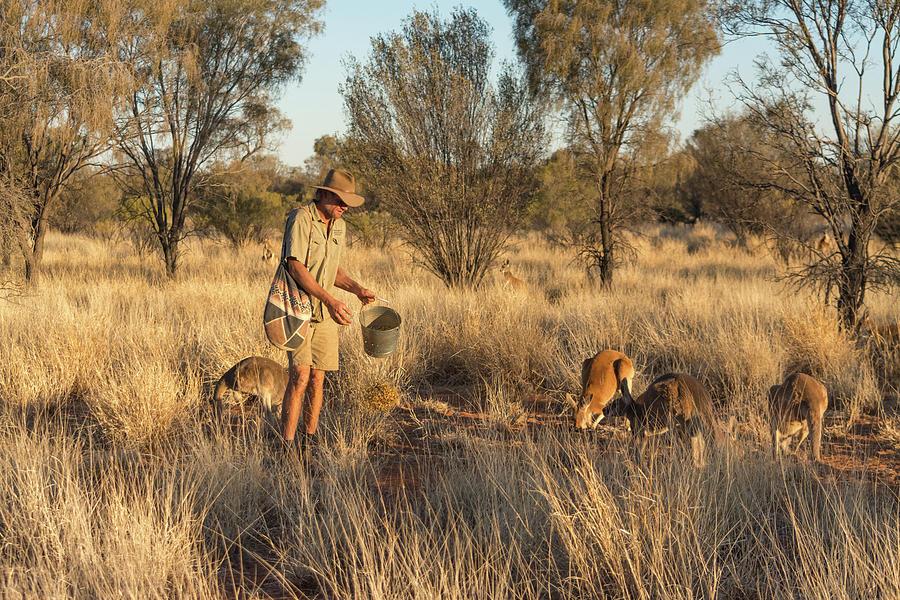 Kangaroo Sanctuary Photograph