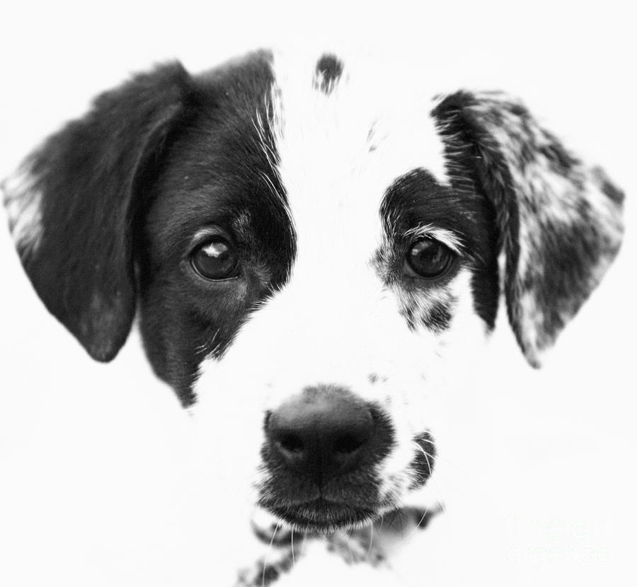 Dogs Photograph - Karma by Amanda Barcon