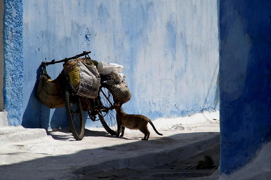 Morocco Photograph - Kasbah Cat by Peter Verdnik