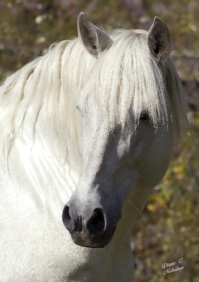 Horse Photograph - Keeper Of The Watch by Diane C Nicholson