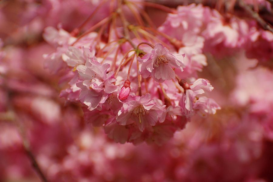 Blooming Photograph - Keeps Me Hanging On by Angie Tirado