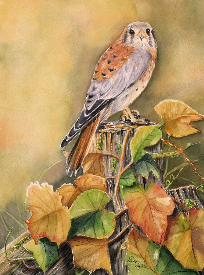 Kestrel Painting - Kestrel In Fall by Patricia Pushaw
