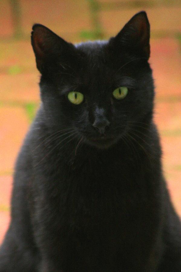 Cat Photograph - Kiko by Christopher Kirby