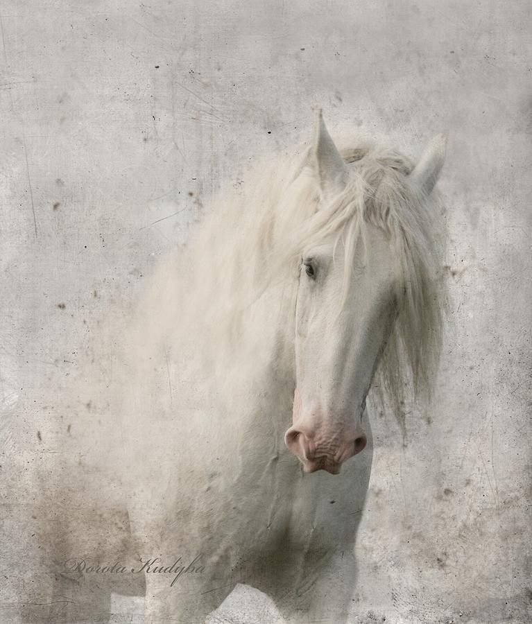 White Horse Photograph - Kindness by Dorota Kudyba