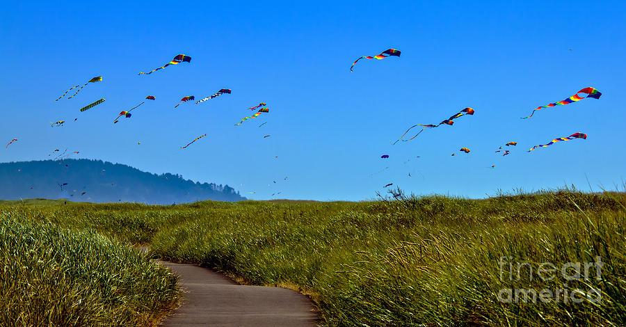 Haybales Photograph - Kites by Robert Bales