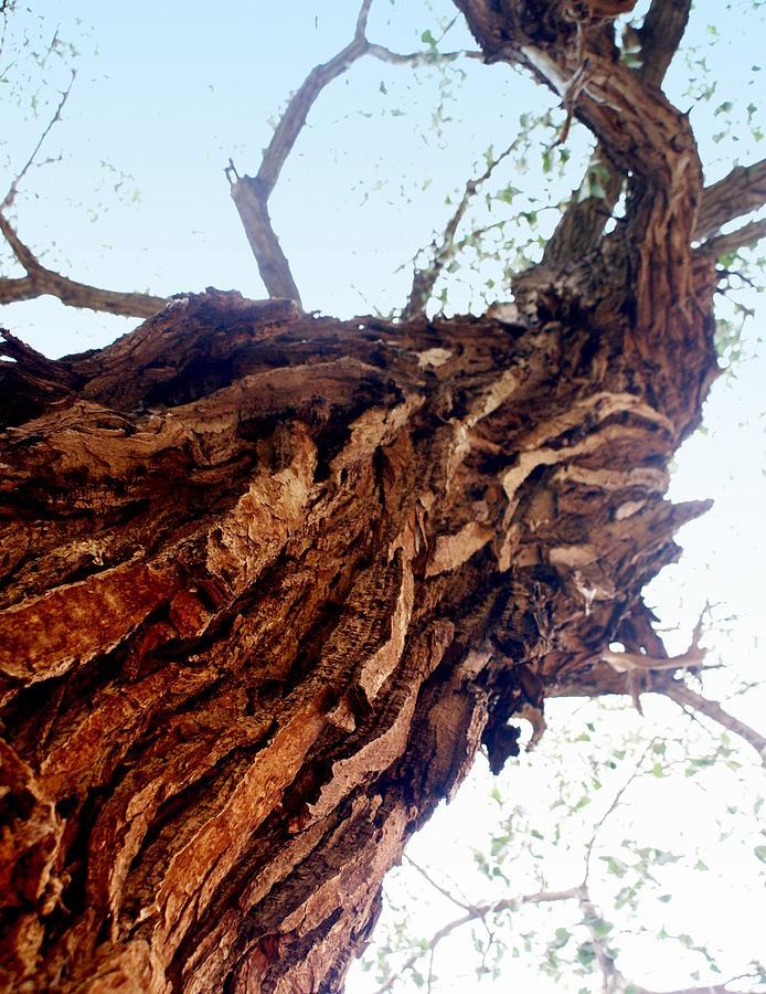 Tree Photograph - knarly Tree by Marty Koch