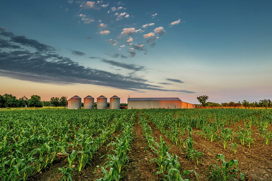 Ruralscape Photograph - Knee High Sweet Corn by Steven Sparks