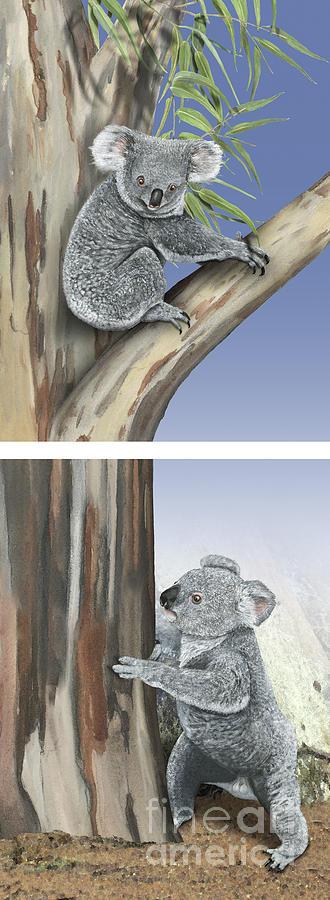 Koala Phascolarctos Cinereus - Koala Bear - Chemical Communicati Painting
