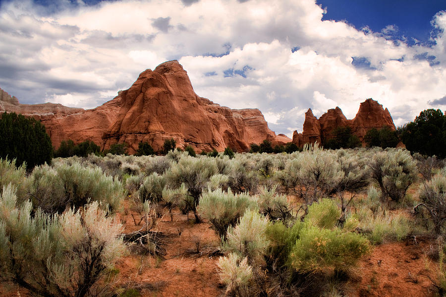 entrada Sandstone Photograph - Kodachrome Sage by Lana Trussell