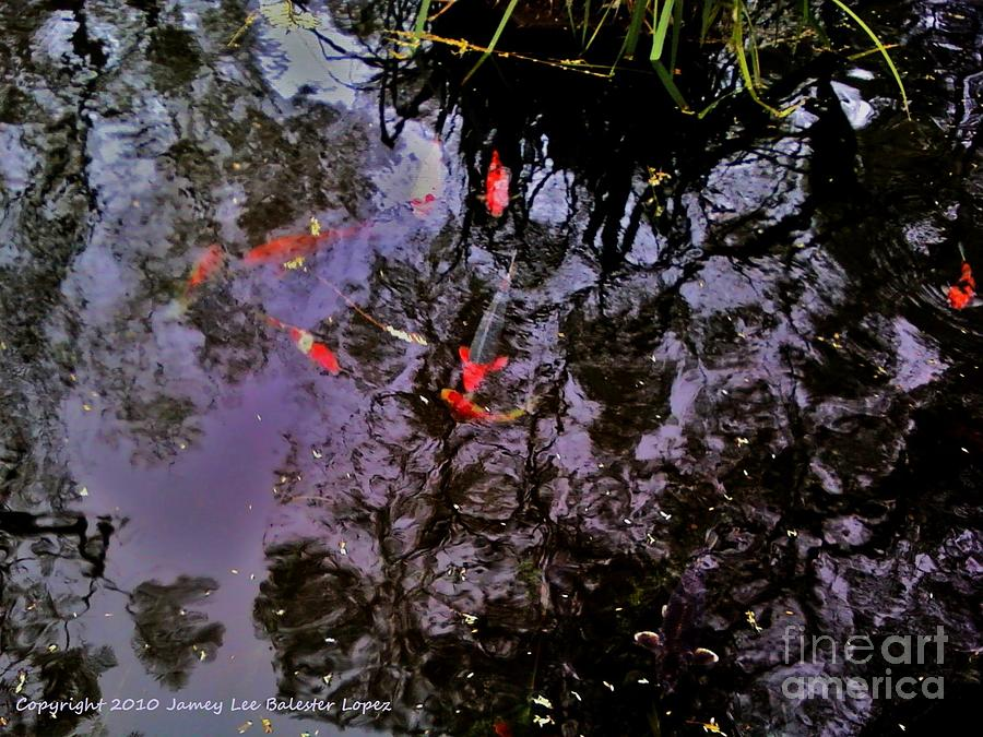 Koi Pond Photograph - Koi Reflections Evening by Jamey Balester