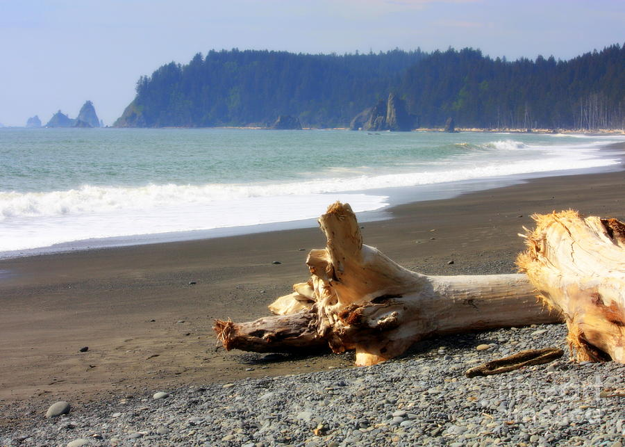 Washington State Photograph - La Push Beach  by Carol Groenen