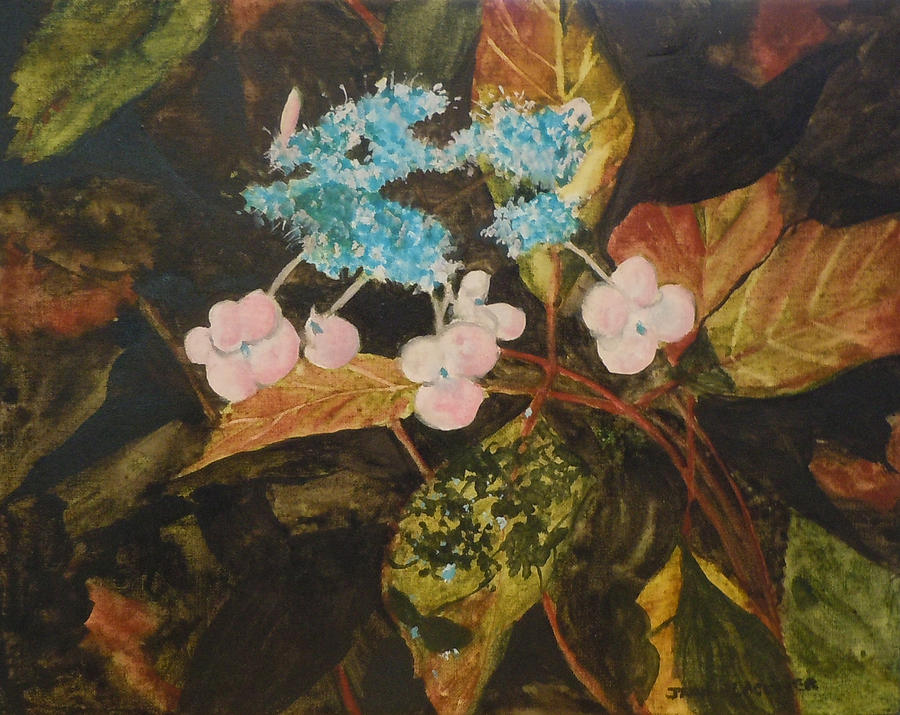 Flowers Painting - Lace Cap 2 by Jean Blackmer