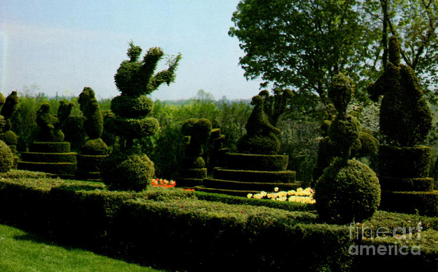 Ladew Topiary Gardens Prints Photograph - Ladew Topiary Gardens by Ruth  Housley