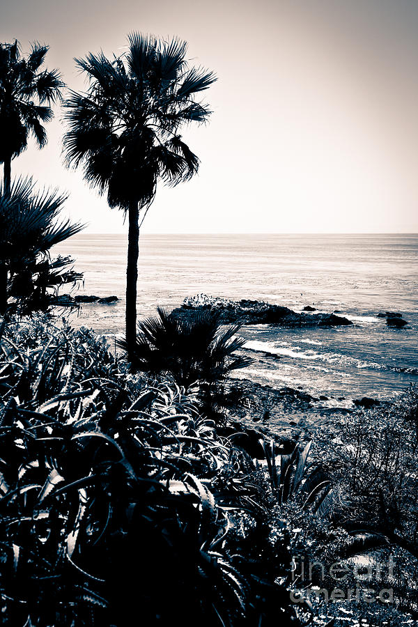 Laguna Beach California Black And White Photograph By Paul