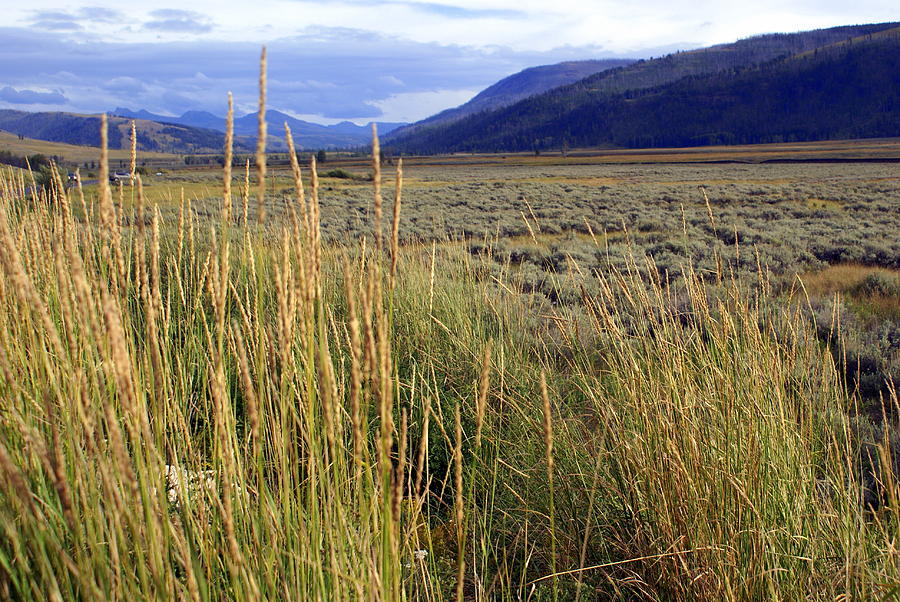 Yellowstone National Park Photograph - Lamar Valley 2 by Marty Koch