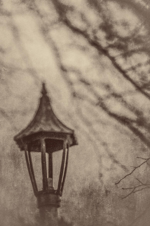Lamp In Winter W Tree Branches Photograph