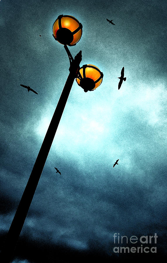 Lamp Photograph - Lamps With Birds by Meirion Matthias