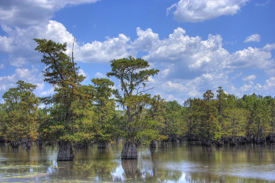 Cypress Trees Photograph - Largemouth Country by Barry Jones