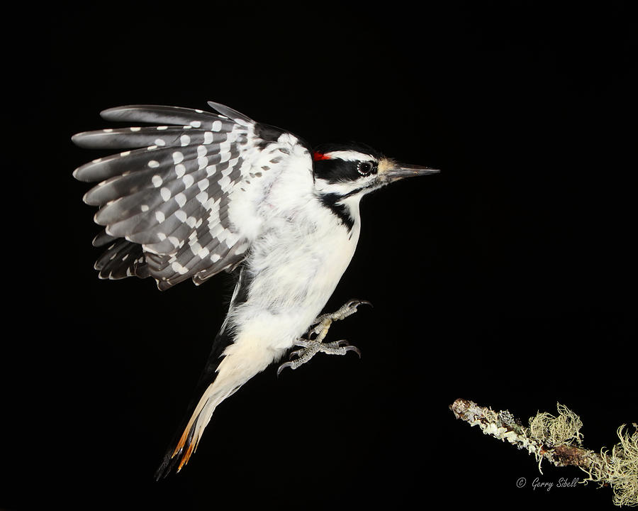 Nature Photograph - Last Call by Gerry Sibell
