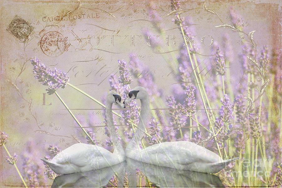 Lavender Swans Zen  Love Photograph