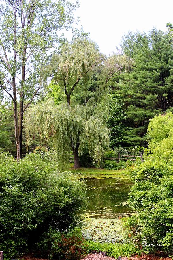 Lazy Pond Photograph