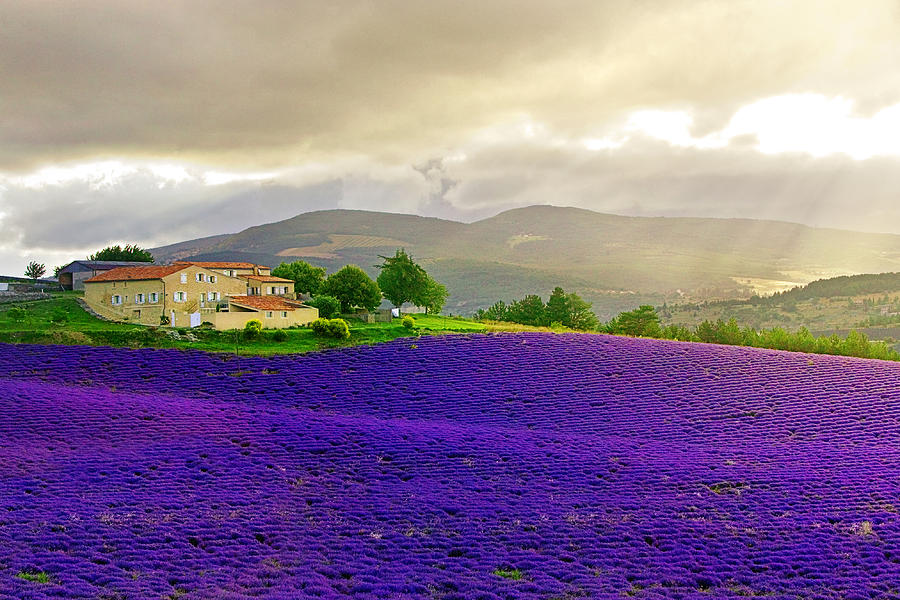 Lavender Fields Photograph - Le Mistral by John Galbo