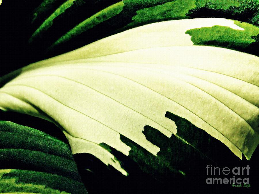 Leaf Photograph - Leaf Abstract 7 by Sarah Loft
