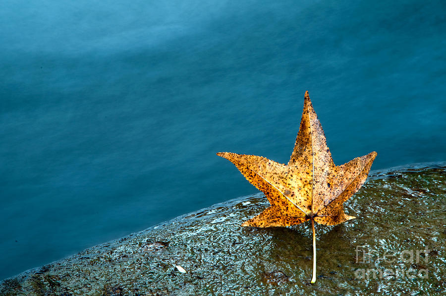 Landscape Photograph - Leaf by Chris Mason