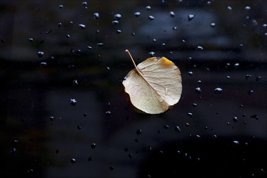 Leaf Photograph - Leaf On Car Door by Robert Ullmann